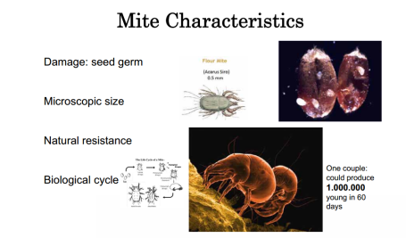 flour mite life cycle
